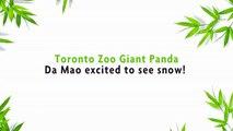 Un panda s'éclate dans la neige