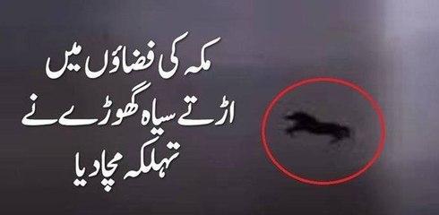 Saudi Arabia  Flying horse news
