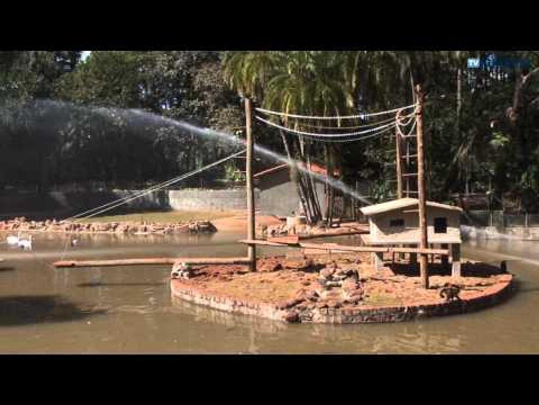 Bosque transfere peixes para novo tanque