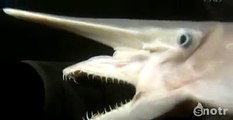 Dangerous Animals THE GOBLIN SHARK WITH ALIEN LIKE DOUBLE JAWS Discovery Animals Nature