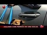 Se realizó juicio abreviado de hombre que viajaba con dos perros en una bolsa - CHV Noticias