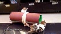 Des chats trop mignons. Compilation d'animaux craquants!