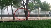 Un homme tué par des Hooligans : Des fans de foot brésiliens jettent un gars par dessus un pont.