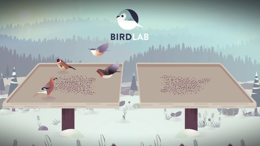 Observez les oiseaux avec l'application BirdLab !