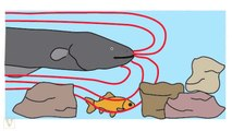 Electric Eels Act Like Tasers When Hunting For Prey