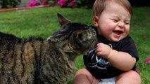 When Cats meet Babies - Cute cat & baby compilation