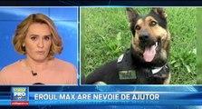 Max, primul câine de luptă al Armatei Române, antrenat special pentru misiunile din teatrele de război, suferă îngrozitor. El riscă să moară, dacă nu primește un tratament veterinar costisitor.