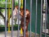 In the Philippines, next to a Zoo keeping and received over an upcoming tourist t-shirt shirt orangutan people who were stunned