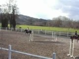 obstacles equitation