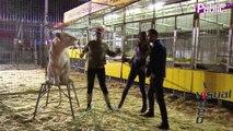 Exclu Vidéo : Leila et Aymeric prennent la pose avec un lion du cirque Pinder !