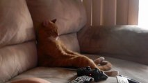 Funny Cat sitting like human and Watching Slayer on TV! Metal kitty