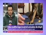 Câinele-erou al Armatei Române, Max, schimbă legea încadrării animalelor din MApN. Ministrul Apărării vrea să îndrepte greşeala. Câinele militar a salvat vieţile soldaţilor din Afganistan.