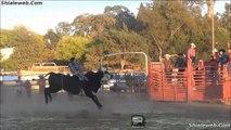 Jaripeo Rodeo West USA 2014 Toros Salvajes Y Jinetes Montando Con Espuelas Reglamentarias