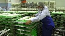 VIDEO. Top des entreprises Deux-Sèvres 2014 : coopérative laitière de la Sèvre à Celles-sur-Belle
