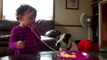 Funny pictures of cats and dogs animals   Cute Babies Love Funny Dogs Compilation 2014