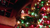 Funny Cats Who Hate Christmas  Compilation 2015 - Cute Cats vs. Christmas Tree