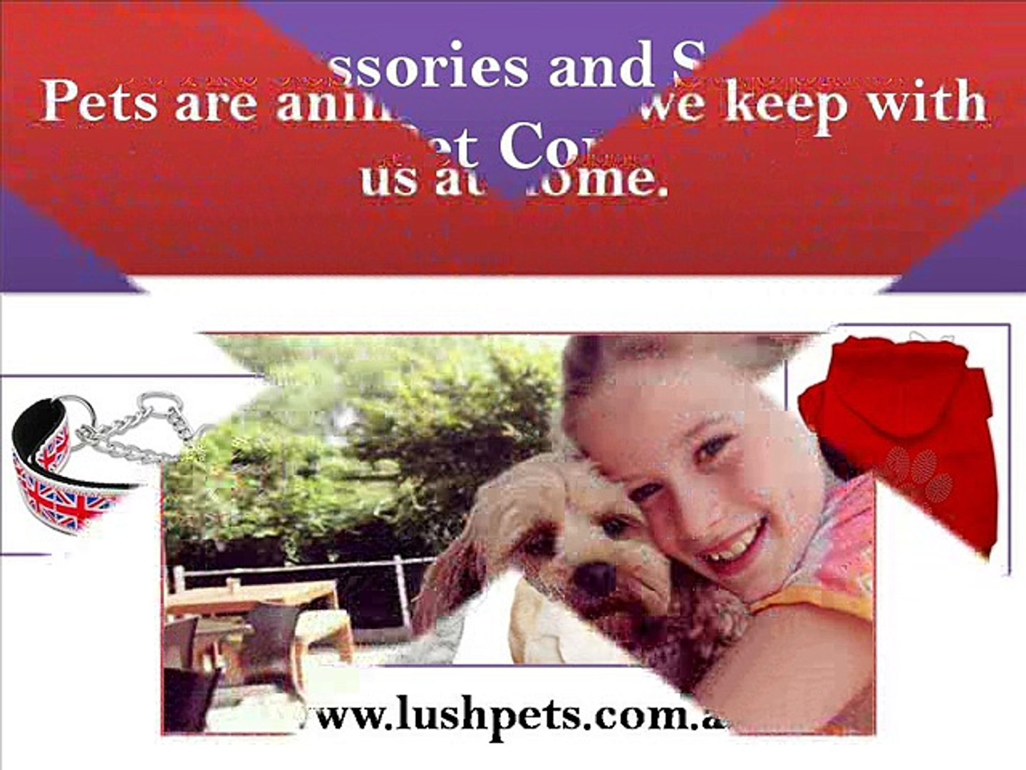 Pet Accessories and Supplies - Lush Pets