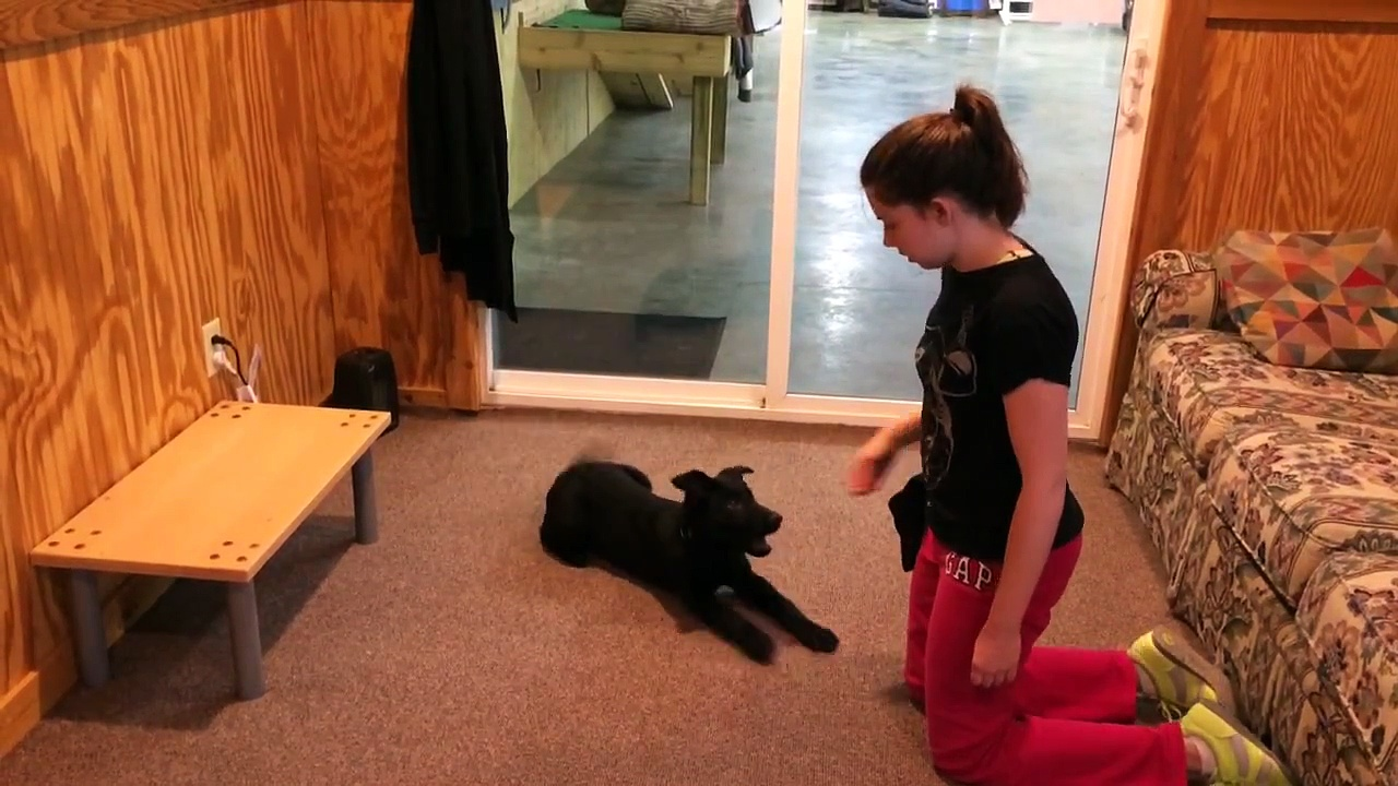Black Puppy Training And Development