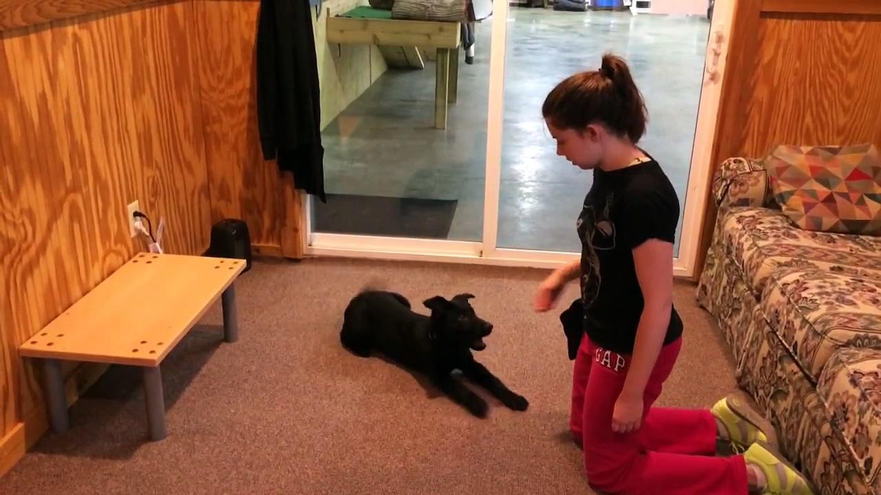 Black Puppy Training And Development