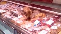 Chat vole de la nourriture dans une poissonnerie
