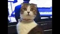 Funny Fail Best of Ultimate Cat Fails,Meilleur drôle de chat ultime échoue et chutes drôle vidéo