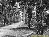 Paysage Basa & Communion Jocelyne & Toilette palmiers