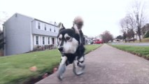 Dog Born With Deformed Front Legs Runs Again on 3D Printed Prosthetics
