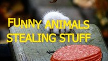 Animals Are Cute   But Sometimes They Can Be Really Annoying like When They Steal Our Food  Toys And So On