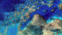 Thalassa Nouvelle-Calédonie Les gardiens du lagon