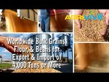 Purchase Bulk Wheat for Export, Wheat Exporting, Wheat Exporters, Wheat Exporter, Wheat Exports