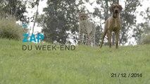 Zap du Week End #12 : best of du zapping de la semaine