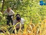 Phim hoàng hôn trên sông Chao Praya trên SNTV tập 33 - phần 1
