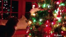'Funny Cats Who Hate Christmas' Compilation 2014 - Cute Cats vs. Christmas Tree
