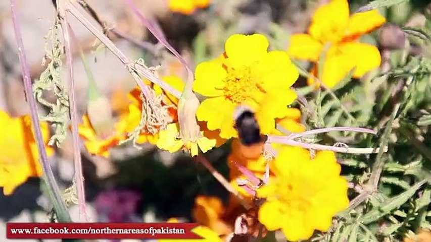 Hunza Valley the land of beautiful Culture & High Mountains