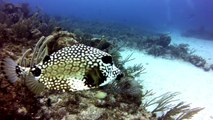 Diving on coral reef in Akumal Mexico filmed with GoPro