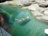 Ours Polaire polar bear