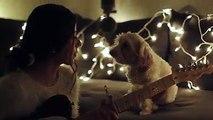 Smells like Christmas Şarkısını huşu ile dinleyen Köpeğin duygusal anları