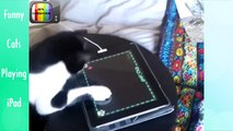 Funny Cats Videos - Funny Cats Playing on iPad - Funny Animals - Cool Cute animals HD