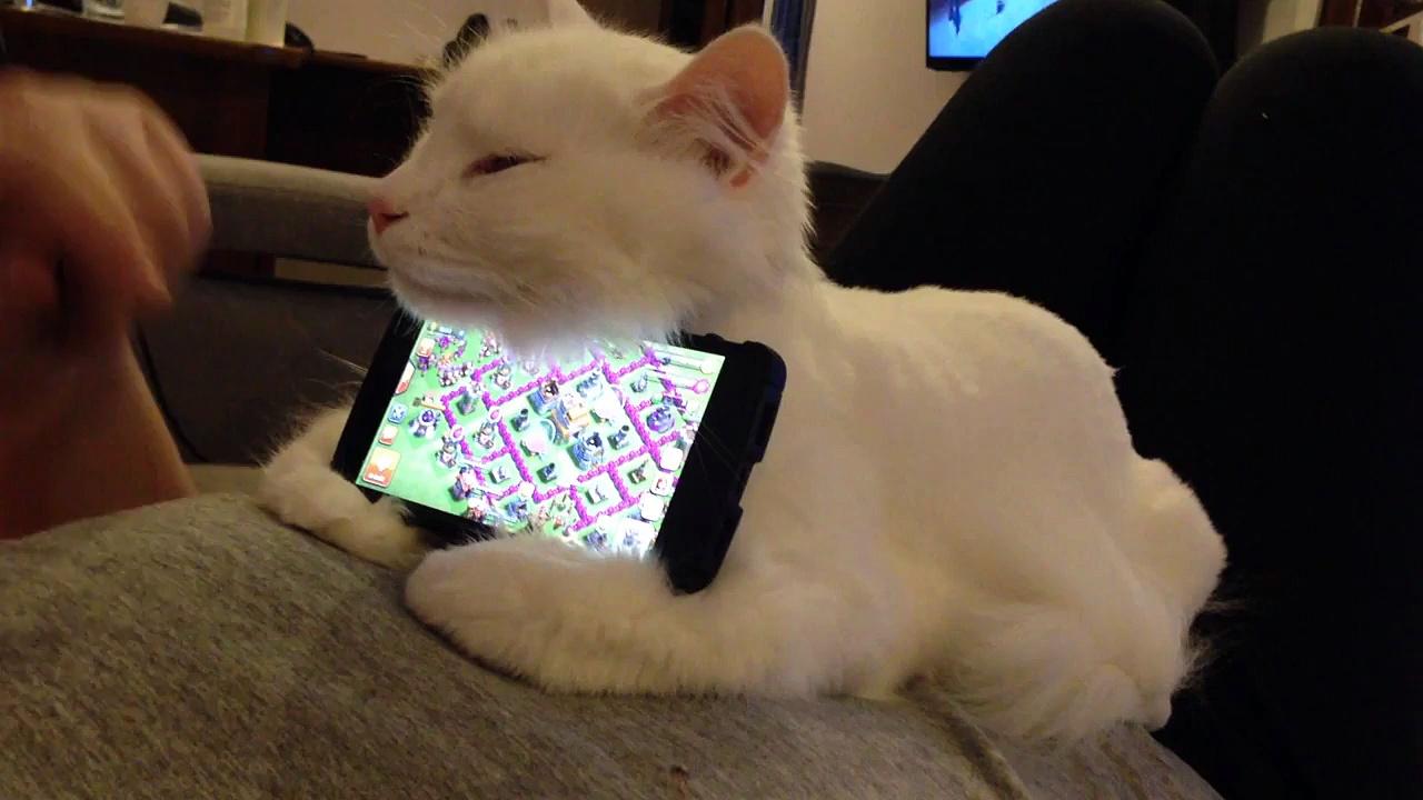 Utiliser son chat comme support de téléphone portable