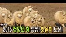 애니멀즈 5회 20150222 FULL HDTV 윤도현 복실이 양몰이 애니멀즈 5화