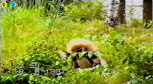 Top funny Animal Videos _ Funny Animals Compilation _ Funny cat videos _ funny dog videos.mp4