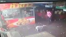 Man tries to kick Dog but face plants instead, Man essaie de shooter chien, mais le visage plantes place