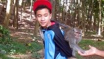 Mathias à Monkey Forest d'Ubud (Bali)