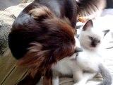 Inoa et les chatons une grande histoire d'amour