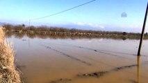 Büyük Menderes Nehri'ndeki Su Taşkını