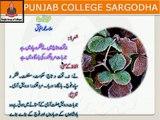 Urdu Ghazal#2 Shair No.1