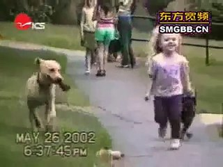 The world_#8217;s most funny dog video