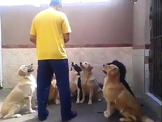 The Most Obedient Dogs