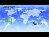 Discovery Channel, Discovery Science, Animal Planet, Discovery World, Discovery HD Showcase