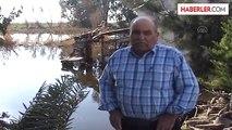 Büyük Menderes Nehri'ndeki Su Taşkını Söke Ovası'nı Vurdu